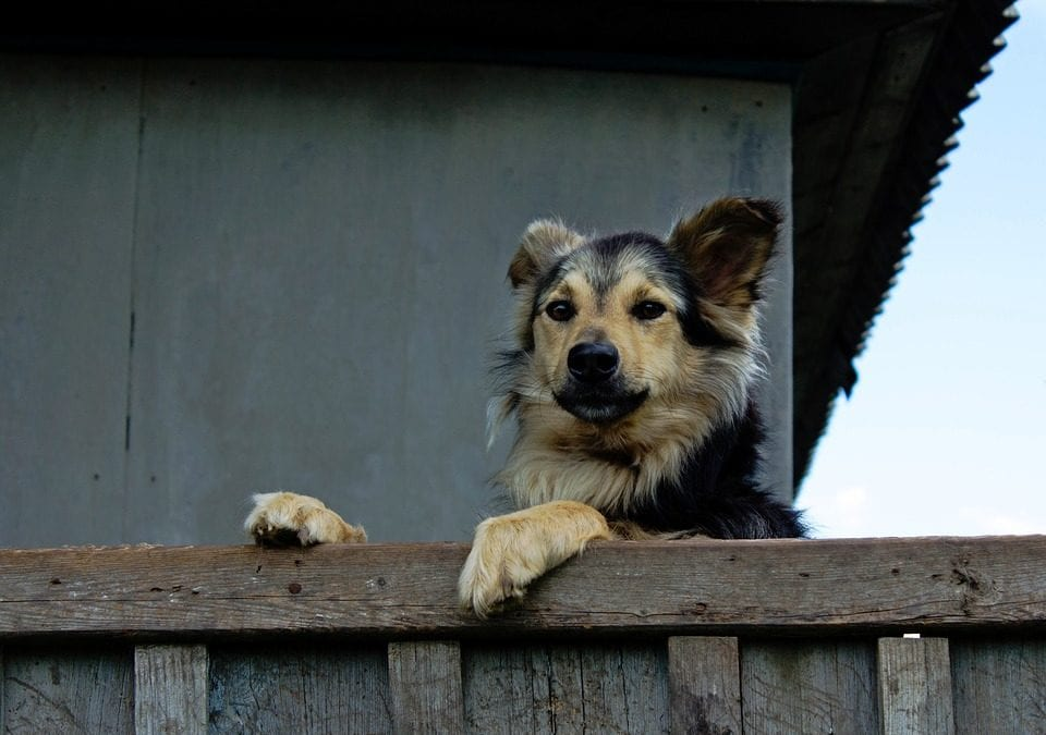 How to Keep Your Pets Safe Before, During, and After a Natural Disaster